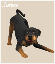Harvey, Jones - a fam