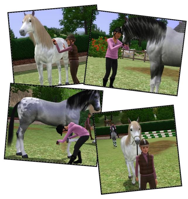 hk care horses